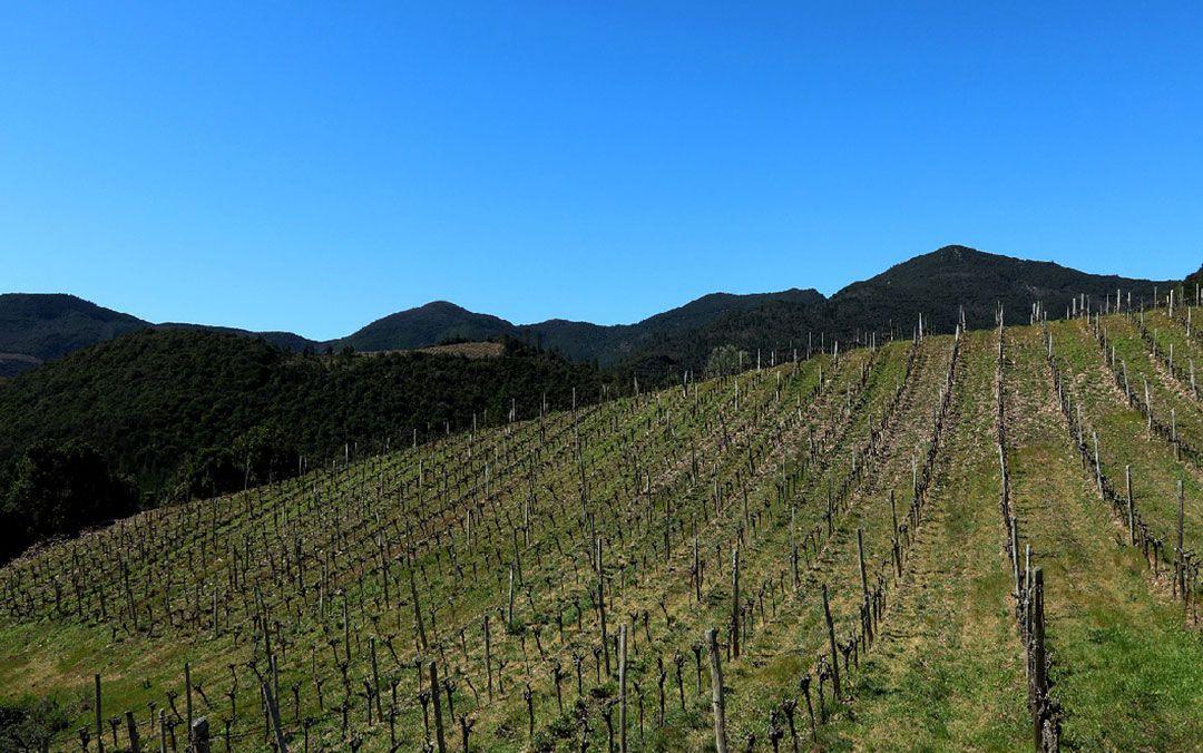 Zimsko prskanje u voćnjaku i vinogradarstvu